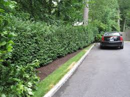 landscaping in new york with hedges around your property u2013 winged