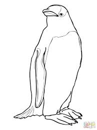 macaroni penguin coloring penguins pages toddlers