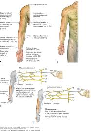 Dermatomes Map Upper Limb Vein Anatomy Images Learn Human Anatomy Image