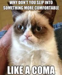 Funny Grumpy Cat Memes - my 35 favorite grumpy cat memes