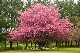 trees shunpiker