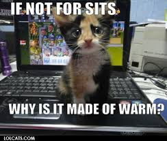 Lol Cat Meme - lolcats if not for sits why is it made of warm