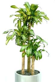 good low light plants best low light plant low light indoor plants that are easy to grow