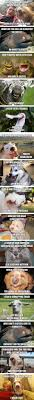 Stupid Animal Memes - animals think they re so funny lame jokes animal and humor