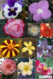 berri native plants kat 4 obama on twitter