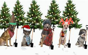 dog christmas cards dog christmas cards cards