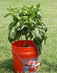 279 best different ways of gardening images on pinterest