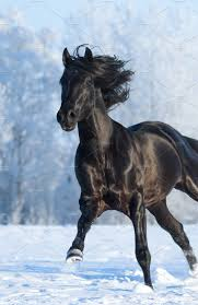 black mustang horse black horse running fast gallops animal photos creative market