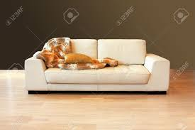 Leather Sofa With Pillows by White Leather Sofa With Pillow And Blanket Stock Photo Picture