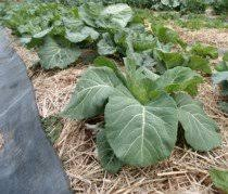 chemical fertilizer vs organic fertilizer which is better