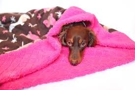 Burrowing Dog Bed Dachshund Fleece Weenie Pocket Pet Bed Burrow Doxie Bed Fair