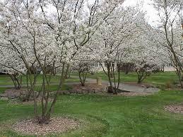 44 best for my garden trees images on garden trees