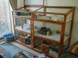 Rabbit Hutch Ramp Rabbit Rehome Adopt A Unwanted Bunny From A Rescue Centre