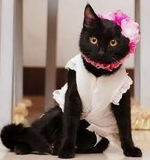 Halloween Costumes Cats Wear 142 Cats Costumes Images Animals Funny