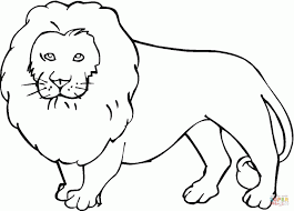 lion coloring pages majestic and wild animal printable pictures to
