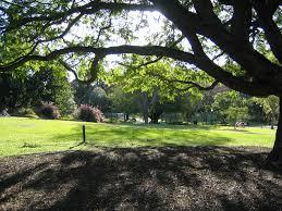City Botanic Gardens Brisbane City Botanic Gardens Brisbane By Heath Hewitt