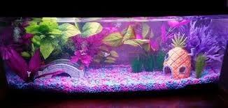 aquarium decorations wow 10 cool fish tank decoration ideas how to copy them tfcg