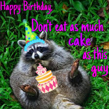 Raccoon Excellent Meme - birthday meme raccoon quotes pinterest