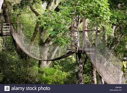 canopy amazon inkaterra canopy bridge tambopata national reserve puerto maldonado