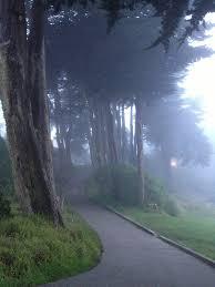 lincoln park san francisco wikipedia