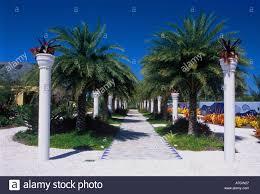 Naples Florida Botanical Garden Date Palm Allee Naples Botanical Garden Naples Fl Usa Stock