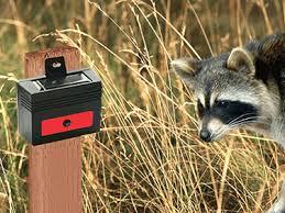 nite guard solar predator control light 4 pack nite guard solar predator detector set of 4 wildlife management