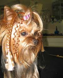 pictures of puppy haircuts for yorkie dogs yorkie haircuts 100 yorkshire terrier hairstyles pictures