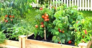 how a fruit and vegetable garden be made beautiful with these cool