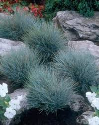 mixing textures in the garden lindheimer muhly grasses