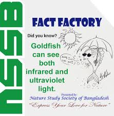 infrared and ultraviolet light goldfish can see both infrared and ultraviolet light nssb