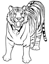 Bengal Tiger Coloring Pages White Page Grig3 Org Coloring Pages Tiger