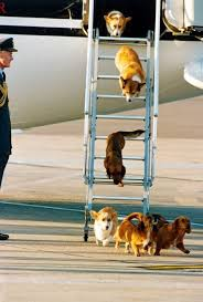 387 best corgis and queen images on pinterest queen elizabeth ii