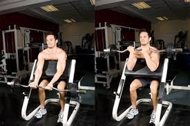 Bench Bicep Curls Preacher Curls For Bicep Workout Biceps Exercise