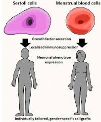 ijms free full text stem cell transplantation is gender