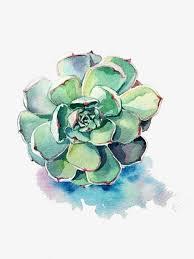blue succulents plant succulents succulent plants png image for