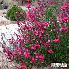 Low Light Outdoor Plants Top 25 Best Water Plants Ideas On Pinterest Indoor Gardening