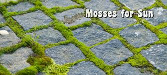 moss acres gardening with moss and growing moss