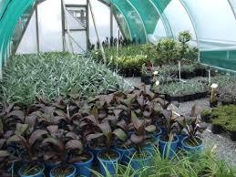 gus nurseries plants nursery garden supplies landscape