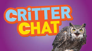 critter chat