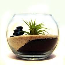 166 best air plant ideas images on pinterest air plants plants