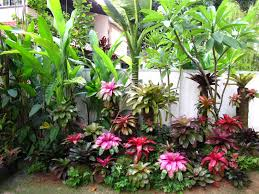 623 best tropical gardens images on pinterest tropical gardens
