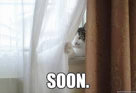 Soon Cat Meme - 30 funny soon meme pics