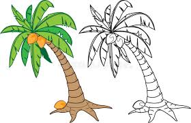 coloring pictures of a palm tree coconut tree stock vector illustration of warm drawing 31634628