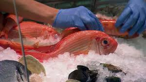 seafood consumption mercury and brain neuropathology in older