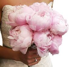 peonies wholesale image result for http www wholeblossoms images