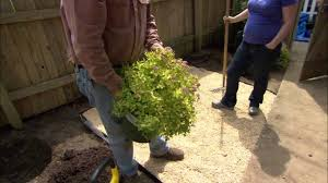 how to landscape a small urban yard this old house youtube