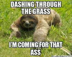 Angry Sloth Meme - i truly cannot get enough of these perverted sloth memes funny