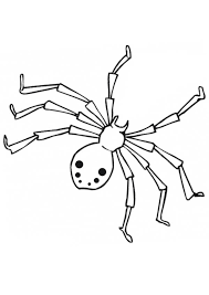 realistic drawing spider coloring netart