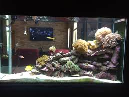Aquascaping A Reef Tank Can I Aquascape A 55 Gallon Tank For Corals If It Is Only 13