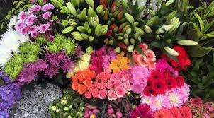 Wholesale Flowers Moffatt U0027s Flower Company U2013 Wholesale Flowers